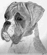 Dogs Drawings - Charlie by Rosanna Maria