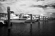 Charters Framed Prints - Charter Fishing Boats Charter Boat Row City Marina Key West Florida Usa Framed Print by Joe Fox