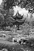 Jamie Pham - Chinese Garden with Pagoda and lake.