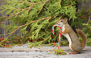 Kelly Nelson - Christmas Squirrel.