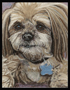Animal Art Tapestries - Textiles Prints - Chu Puppy Print by Dena Kotka