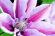 Kelly Digital Art Posters - Clematis Poster by Kelly Nowak