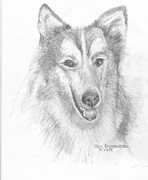 Collie Drawings Posters - Collie Poster by Jim Hubbard