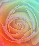 Colorful Paintings - Colorful rose I by George Rossidis