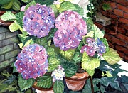 Purple Hydrangeas Framed Prints - Corner Garden Framed Print by Barbara Jewell