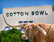 Longhorn Photos - Cotton Bowl by David and Carol Kelly