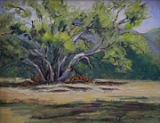 Tree. Sycamore Paintings - Country Sprawl by Cheryl Bloomfield