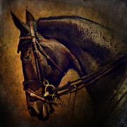 Thoroughbred Gelding Prints - Cover Girl Print by Lyndsey Warren