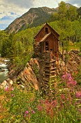 Power Plants Prints - Crystal Mill Wildflowers Print by Adam Jewell