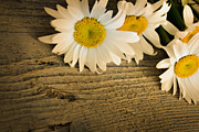 Mythja  Photography - Daisies
