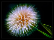Dandelion Digital Art - Dandelion by Dirk Czarnota