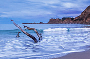 Driftwood Photos - Dawn Tolaga Bay New Zealand by Colin and Linda McKie