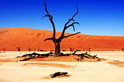 West Africa Framed Prints - Dead Vlei Tree  Framed Print by Aidan Moran