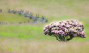 Split Rail Fence Digital Art Framed Prints - Delicate Meadow - a Tranquil Moments Landscape Framed Print by Dan Carmichael