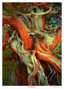 Tree Mixed Media Framed Prints - Deranged Redwood Framed Print by Lar Matre