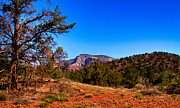 Sedona Framed Prints - Diamondback Gulch near Sedona Arizona Framed Print by David Patterson