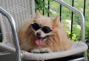 Hot Dog Photos - Dog in Summer by Charline Xia