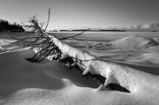 Winter Photos Posters - Driftwood Poster by Jakub Sisak