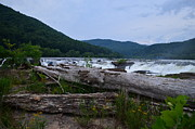 Beckley Wv Photographer Prints - Driftwood Print by Lj Lambert