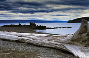 Kachemak Bay State Wilderness Park Posters - Driftwood on Beach Poster by Thomas R Fletcher