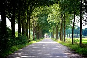 Dutch Landscape Posters - Dutch Road Poster by Carol Groenen