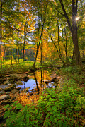 Early Autumn Print by Bill  Wakeley