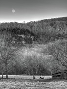 Boxley Valley Prints - Elk and Moon Print by Tony  Colvin