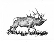 Rack Drawings Prints - Elk Print by Barbara Lightner