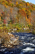 Rushing Prints - Fall along Cherry River Print by Thomas R Fletcher