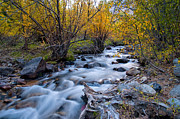 Water Fall Prints - Fall at Big Pine Creek Print by Cat Connor