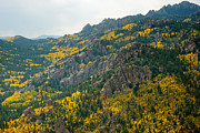 Colorado Front Range Photos - Fall Colors In Pike National Forest by John Wark