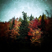 Pine Trees Art - Fall Colors by Natasha Marco