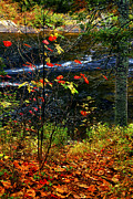 Autumn Foliage Prints - Fall forest and river Print by Elena Elisseeva