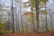Forest Floor Photos - Fall Morning by Todd Hostetter
