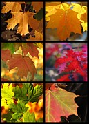 Impressionism Acrylic Prints Photos - Fall series 29 by France Laliberte