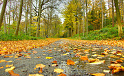 Limburg Posters - Fallen leaves in autumn Poster by Jan Marijs