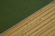 Agronomy Photo Prints - Farmland, Great Plains Print by John Wark