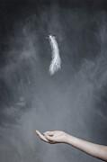 Feather Print by Joana Kruse