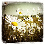 Pretty Flowers Photos - Field of flowers by Les Cunliffe