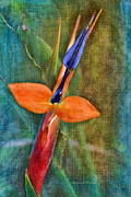 Blue Petals Photos - Floral Contentment by Deborah Benoit