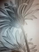 Aster Drawings - Floral Rising  by Christine  Blodgett
