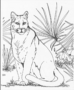 Panther Drawings - Florida Panther by Dianne McDaniel