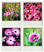Assorted Posters - Flowers Poster by Les Cunliffe