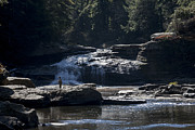 Swallow Falls State Park Art - Fly Fishing at Swallow Falls in Maryland by William Kuta