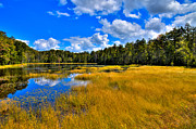 Fir Trees Prints - Fly Pond in the Adirondacks Print by David Patterson