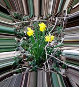 Trumpet Digital Art - Focusing on the Daffodils by Gail Matthews