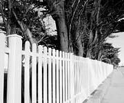 White Picket Fence Framed Prints - Follow the Fence Framed Print by Julie Palencia