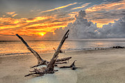 Keith Allen - Folly Beach Driftwood