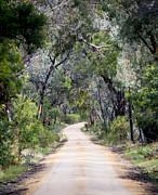 Tim Hester - Forest Road