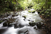 Water Flowing Framed Prints - Forest stream Framed Print by Les Cunliffe